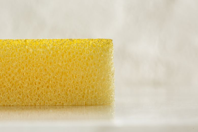Kamenoko Sponge_002